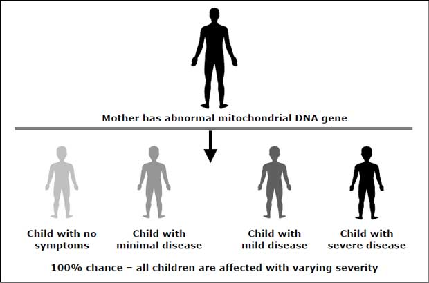 Maternal Inheritance Genetic Map